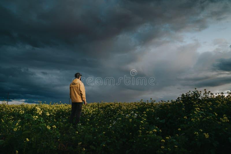 Ein einsamer Mann in gelber Jacke, der ländliche Gebiete in Litauen erforscht Landwirtschaftliche Szene von Raps und dramatischen stockfotos