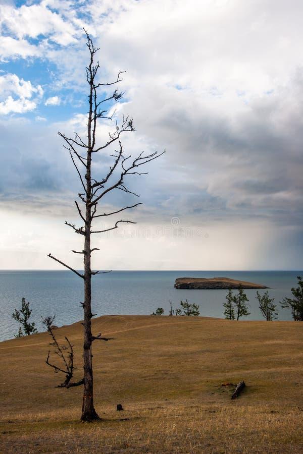 Ein einsamer trockener toter Baum steht auf dem Ufer vom Baikalsee Sehen Sie die Insel lizenzfreie stockbilder