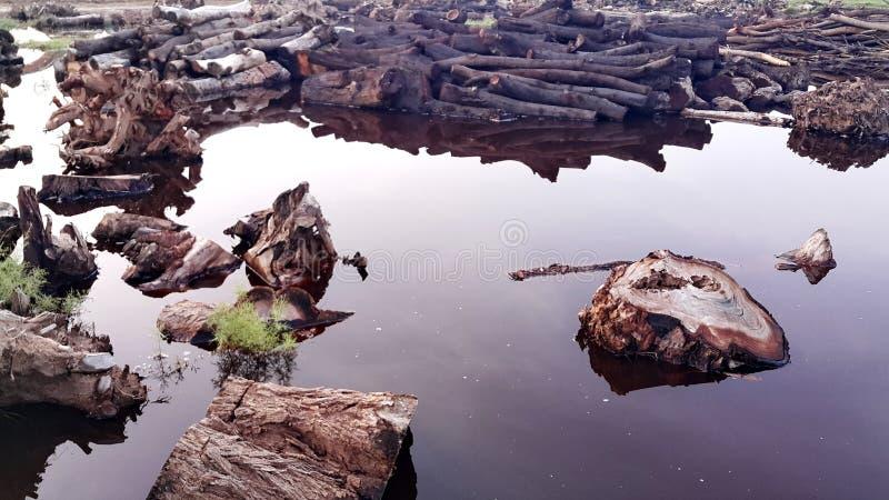Ein einsames Holz im Teich stockbild