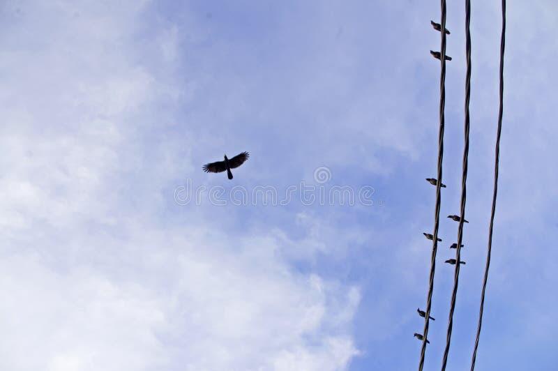 Ein einsames Krähenfliegen im Himmel lizenzfreie stockfotos