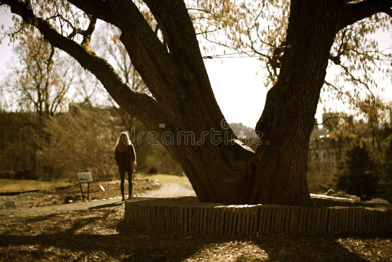 Ein einsames Mädchen, das in einen Park wartet stockbilder