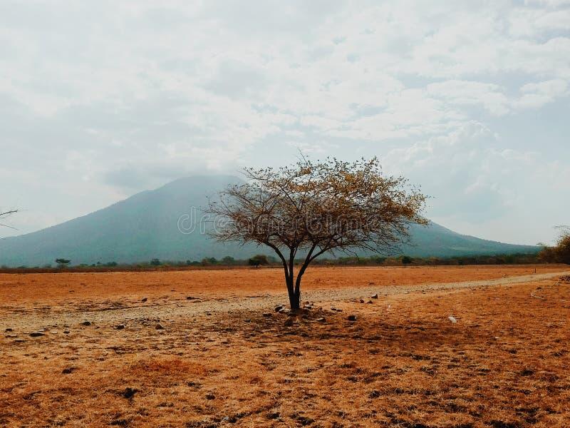 Ein einzelner Baum stockbild