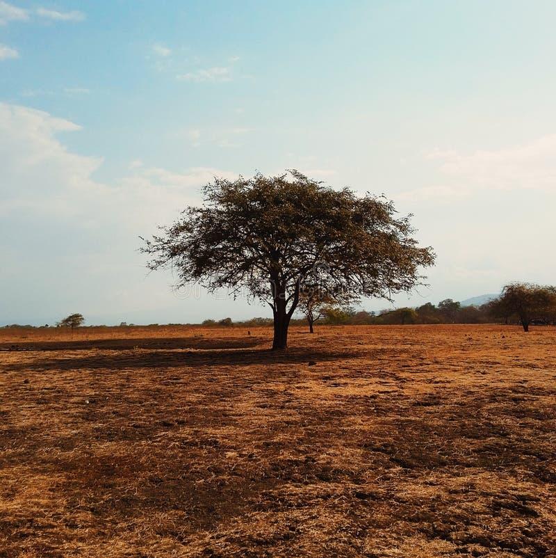 Ein einzelner Baum (2) stockfotos