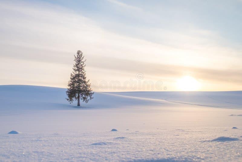 Ein einzelner Weihnachtsbaum unter dem Sonnenuntergang und Hügel von Weiß shinny Schnee lizenzfreie stockfotografie