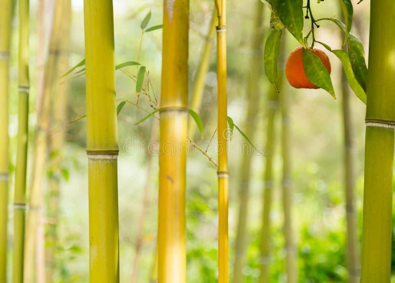 Ein einzelnes orange Hängen unter einigen Bäumen in einem Garten stockfoto