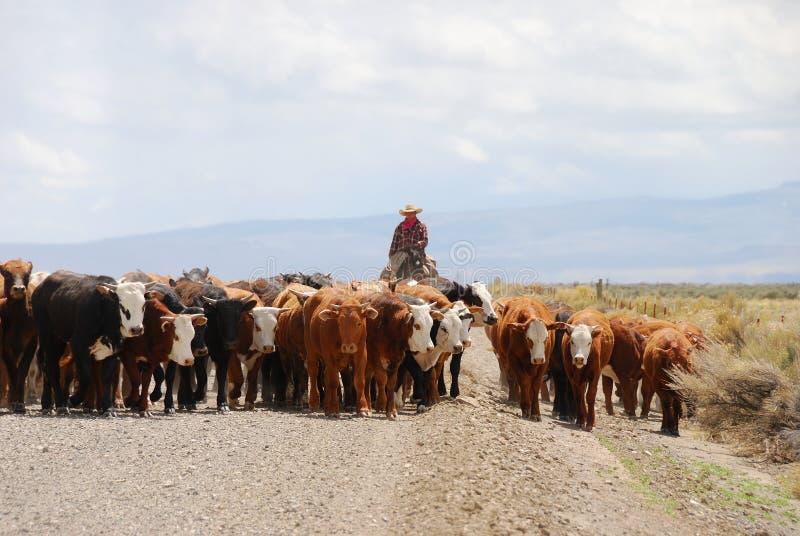 Vieh Hearding stockfotografie