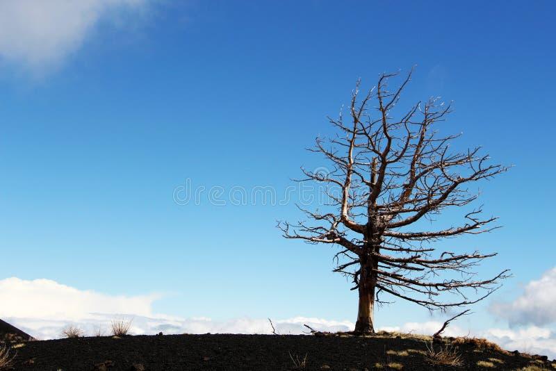 Ein einziger toter Baum gegen den blauen Himmel stockbilder