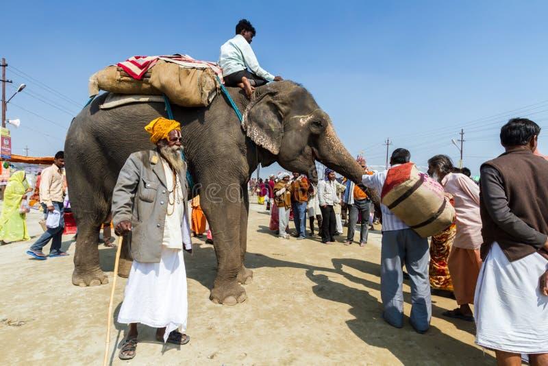 Ein Elefant beim Kumbha Mela, Indien lizenzfreie stockfotografie