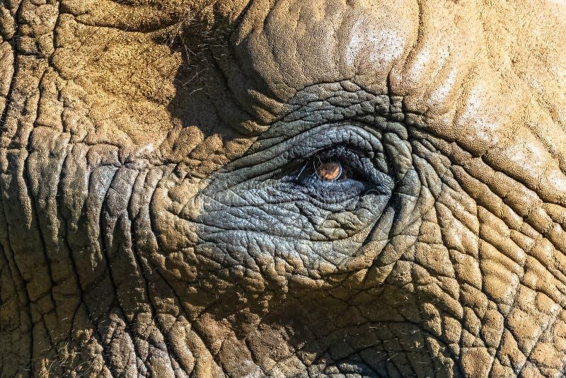 Ein Elefantauge lizenzfreie stockbilder