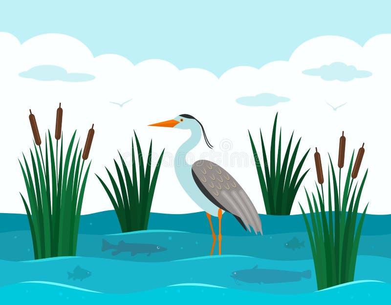 Ein eleganter europäischer Reiher steht in einem Teich mit Schilfen und Flussfischen Landschaftsteich vektor abbildung