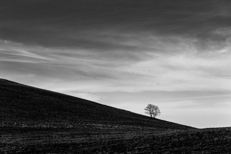 Ein entferntes, loney Baum auf einem bloßen Hügel, unter einem tiefen Himmel mit weißen Wolken stockfotos