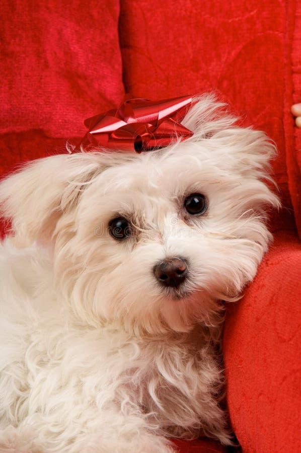Ein entzückender Weihnachtswelpe lizenzfreies stockbild