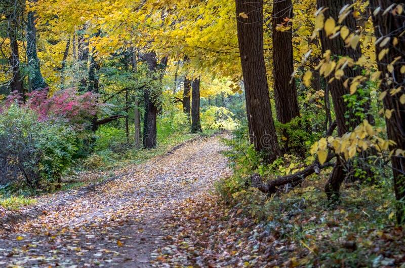 Ein Erdweg bedeckte Lärmblätter nimmt ein in einen schönen bunten Wald in Michigan USA stockfoto