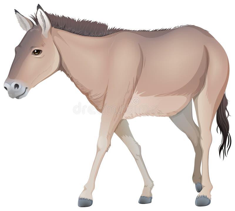 Ein Esel stock abbildung