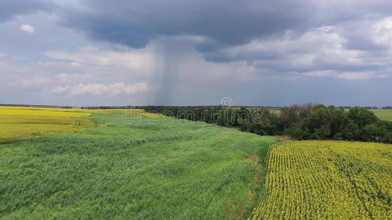 Ein Feld der Sonnenblumenvogelperspektive Im Hintergrund bewölkter Himmel stockfotos