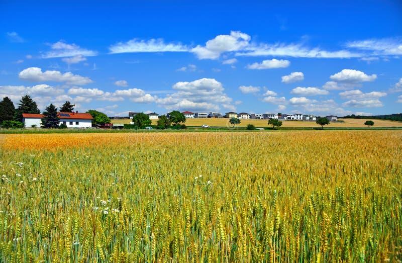 Ein Feld des Weizens nahe Stadt Wimpassing ein der Leitha Österreich stockfotos