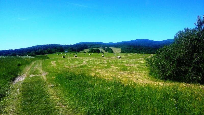 Ein Feld mit Garben Heu stockfoto