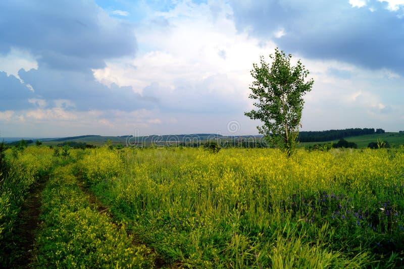 Ein Feld mit gelben Blumen unter einem schweren Himmel lizenzfreies stockfoto