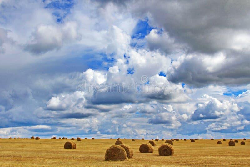 Ein Feld voll von Stapeln des gemähten Heus gegen den blauen Himmel mit weißen üppigen Wolken lizenzfreie stockbilder