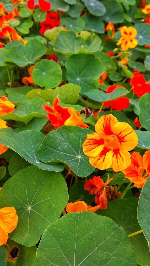 Ein Feld von Blumen mit vibrierenden Farben lizenzfreies stockfoto