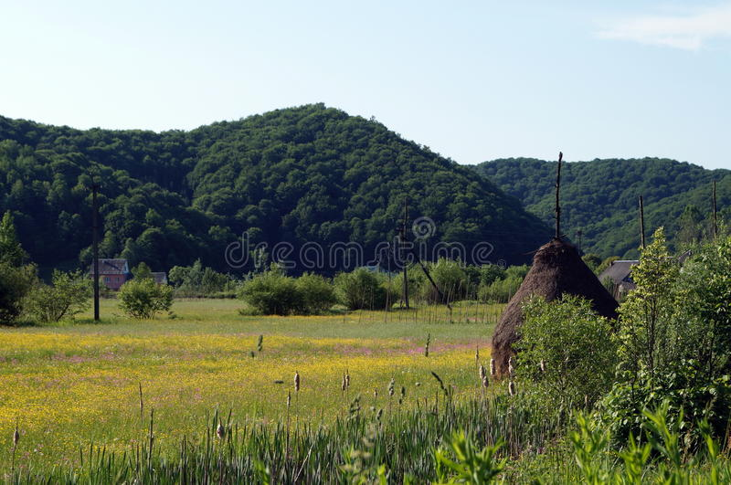 Ein Feld von gelben Blumen nahe den Bergen lizenzfreies stockbild