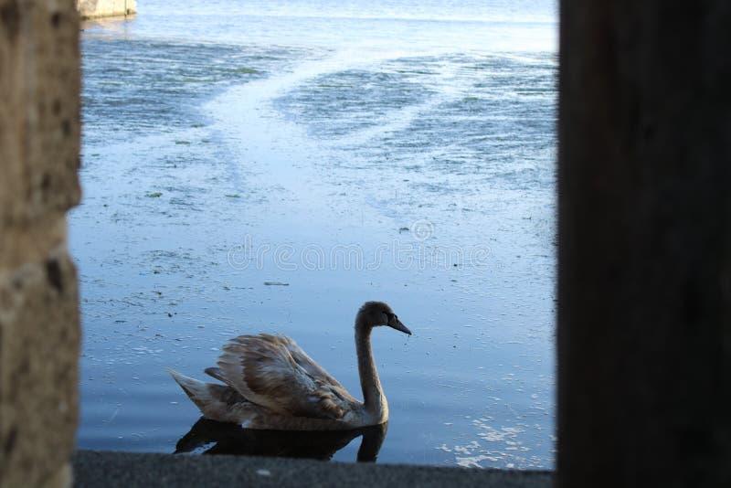 Ein Fenster auf dem See lizenzfreies stockbild