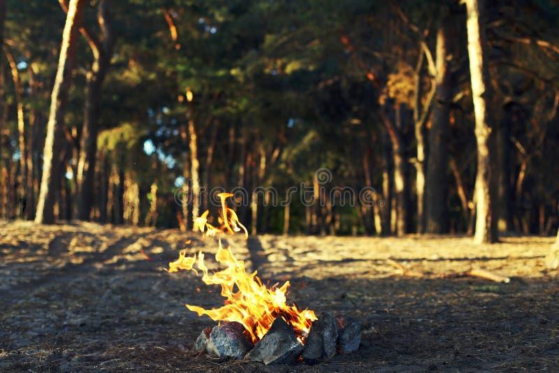 Ein Feuer in einem Kiefernwald lizenzfreie stockfotografie