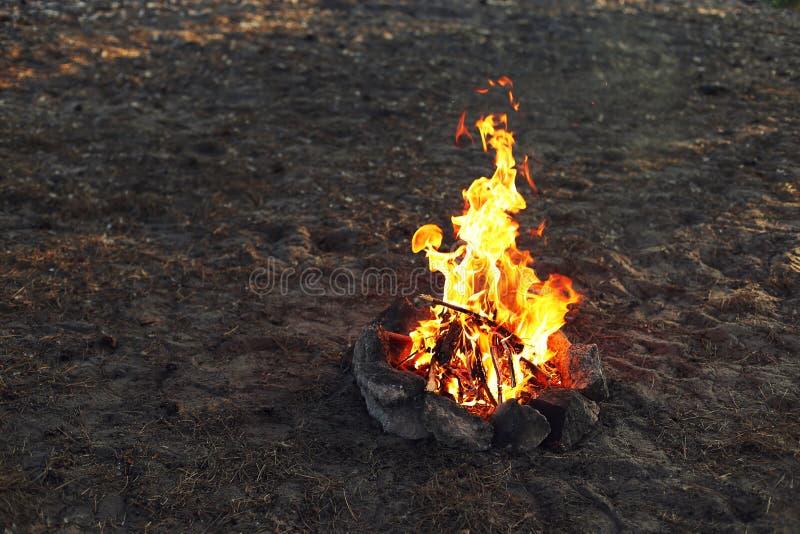 Ein Feuer in einem Kiefernwald lizenzfreie stockfotos