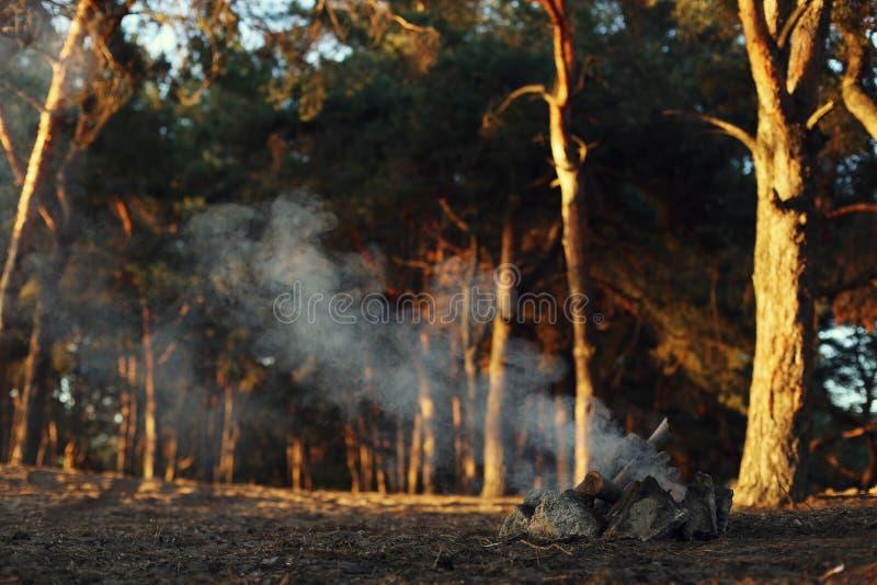 Ein Feuer in einem Kiefernwald, Rauch ohne Feuer lizenzfreies stockbild