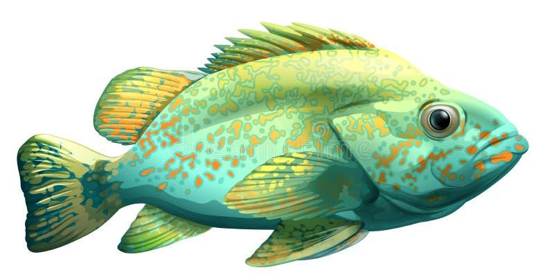 Ein Fisch vektor abbildung