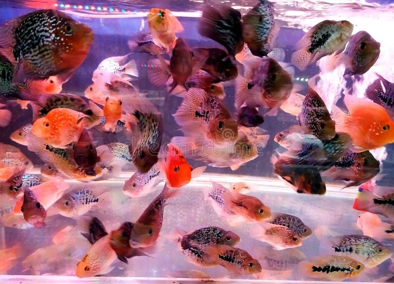 Ein Fisch im Ozean lizenzfreies stockfoto