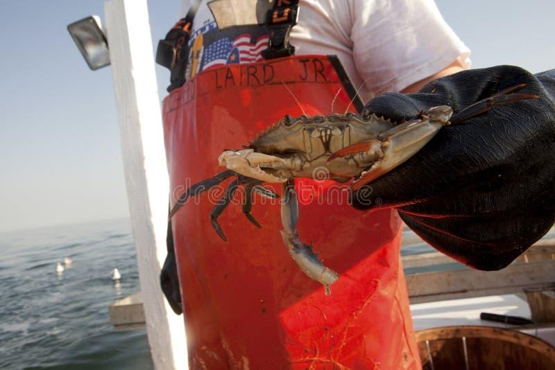 Ein Fischer, der eine Krabbe hält stockbilder