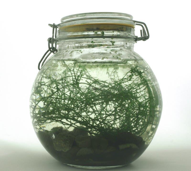 Ein Flaschen-Oekosystem lizenzfreies stockfoto