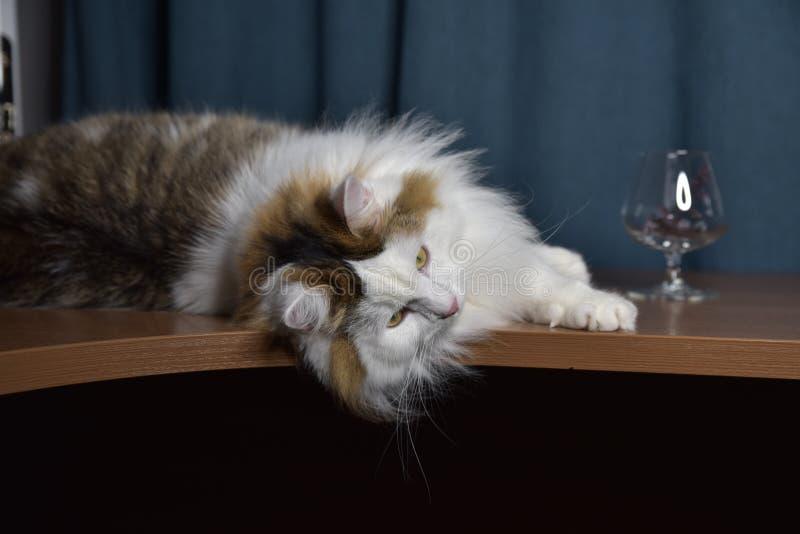 Ein flauschiges Kätzchen sitzt auf dem Tisch und schaut in ein Glas, berührt es mit seiner Pfote, ist er interessiert lizenzfreie stockfotos