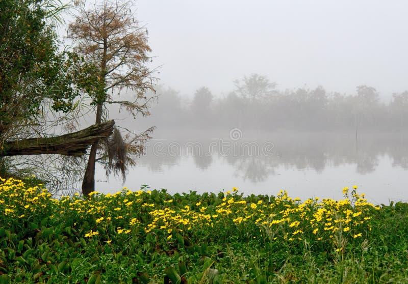 Ein Flecken von hellen gelben Gänseblümchen auf der Bank von einem Slough in Guste-Insel Louisiana lizenzfreie stockfotos