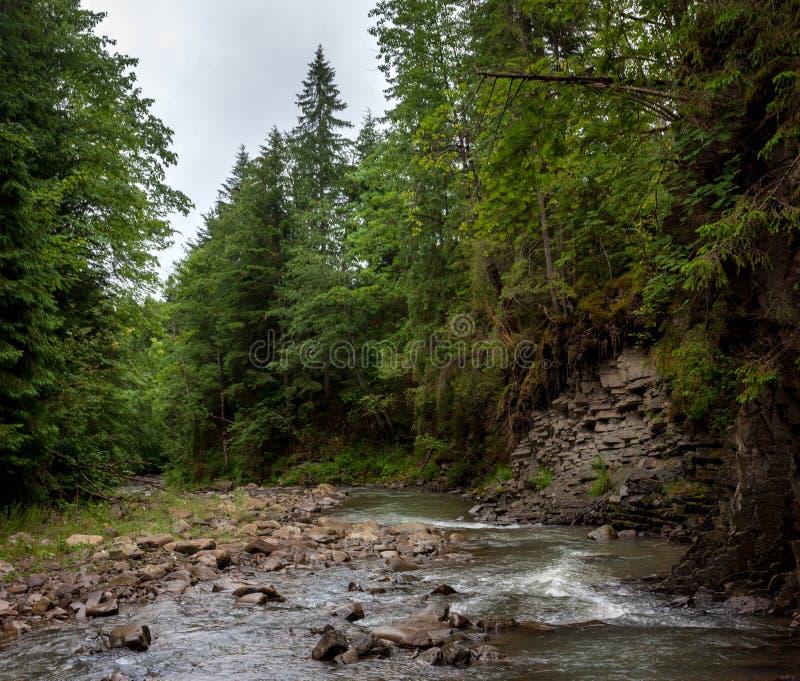 Ein Fluss im Wald lizenzfreie stockfotos
