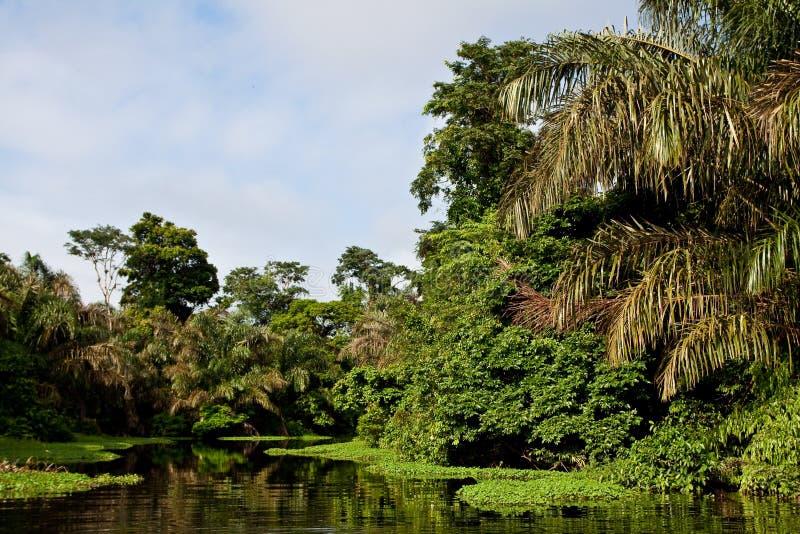 Ein Fluss und Bäume in einem Regenwald lizenzfreies stockbild