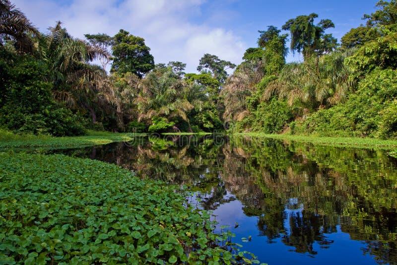 Ein Fluss und Bäume in einem Regenwald stockfoto