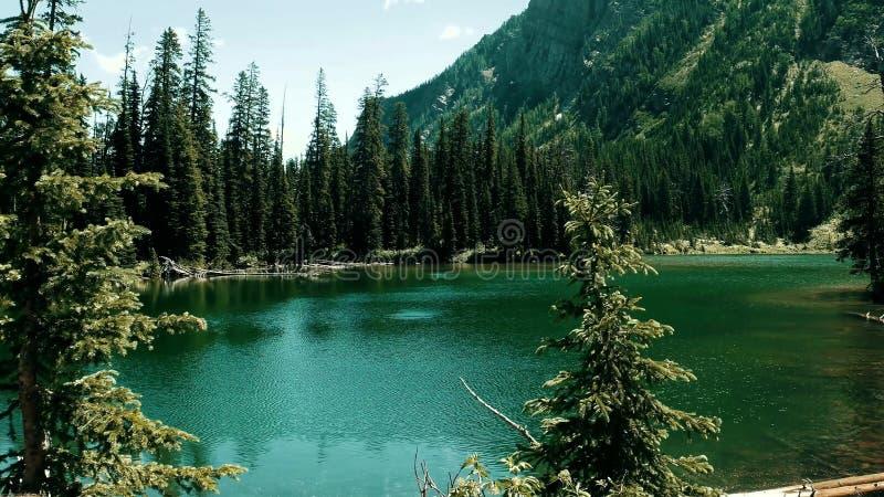Ein Fluss unter Felsen und Wäldern lizenzfreies stockfoto
