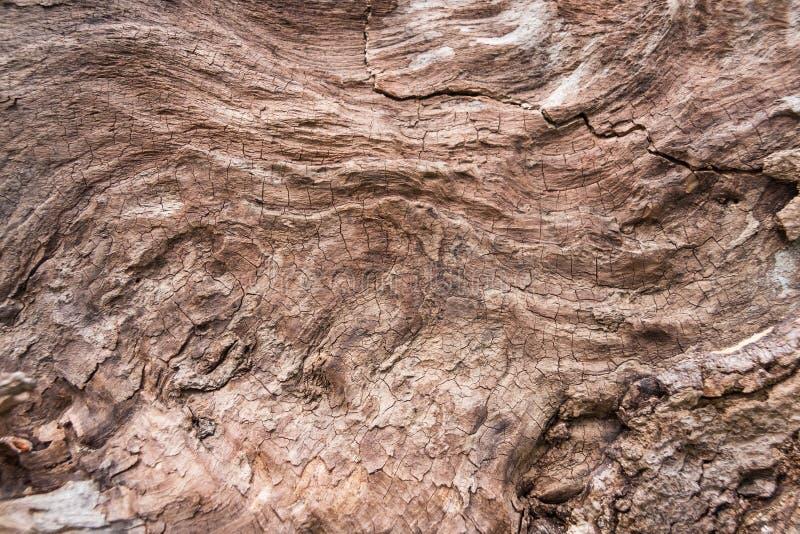 Ein Fragment eines umgeworfenen Baums beraubt Barke lizenzfreie stockbilder