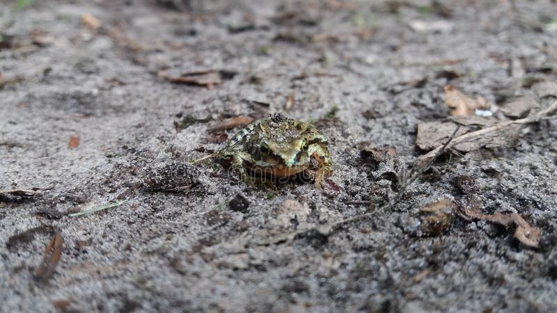 Ein Frosch am Boden stockbilder