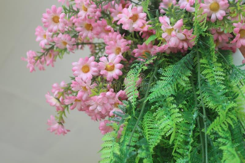 Ein Gänseblümchen für eine reizende und schöne Dame lizenzfreies stockfoto
