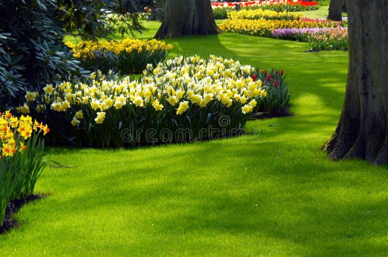 Ein Garten im Frühjahr stockbilder