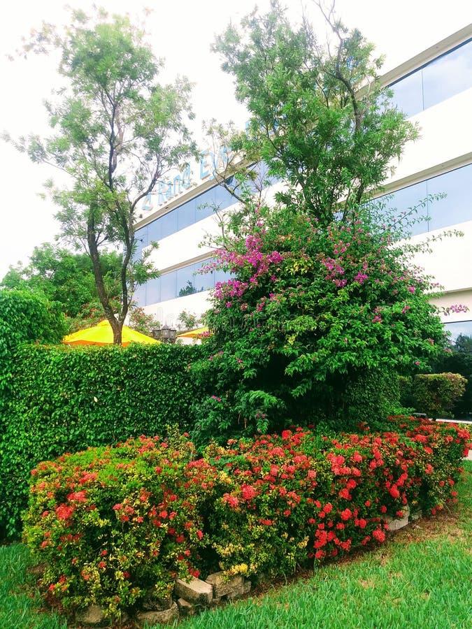 Ein Garten in Miami, Florida Vereinigte Staaten lizenzfreie stockbilder