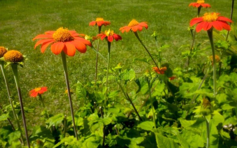 Ein Garten mit orange Blumen stockfotos