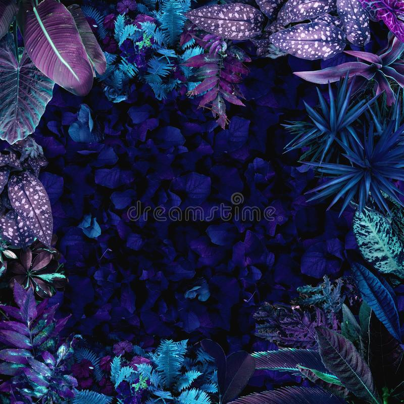 Ein Garten mit purpurroten Anlagen und exotischen Bäumen vektor abbildung