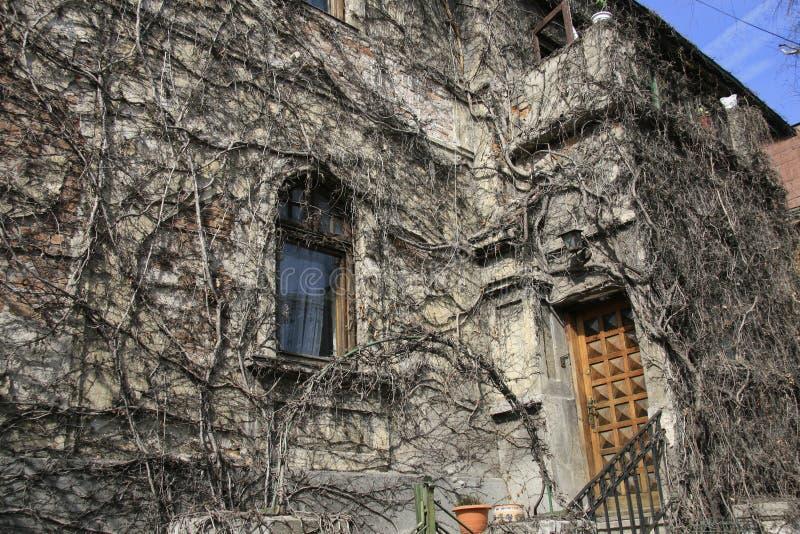 Ein Gebäude bedeckt durch Kriechpflanzen lizenzfreie stockbilder