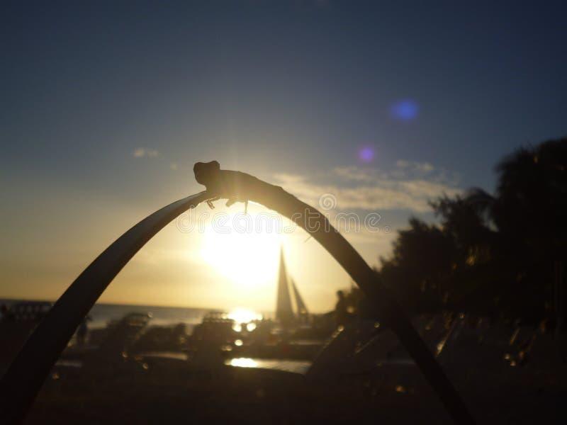 Ein Gecko und ein Sonnenuntergang lizenzfreie stockfotografie