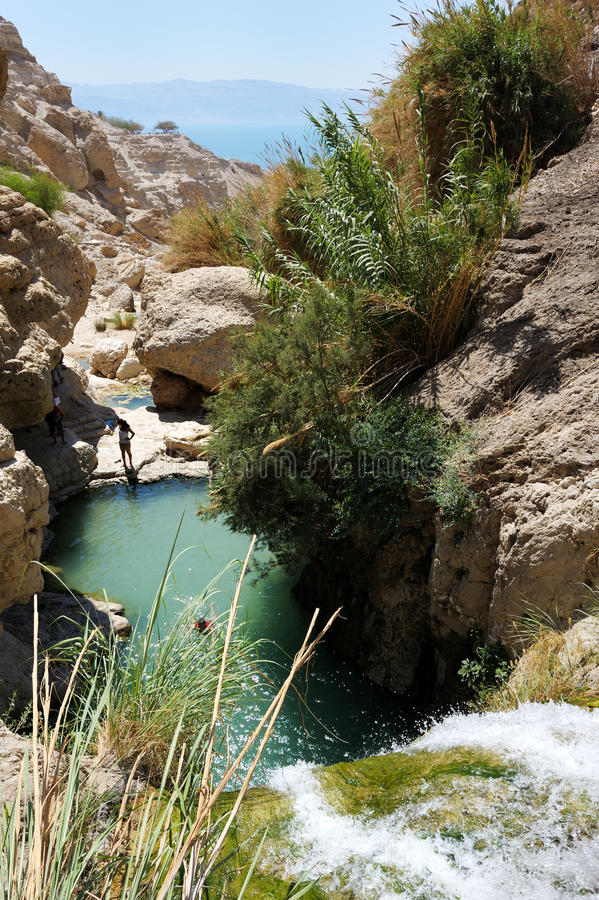 Ein Gedi Nature Reserve (Israel) royalty free stock photo