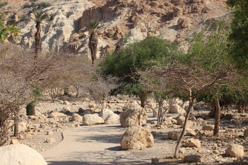 Ein Gedi naturreserv, dött hav, Israel royaltyfria foton
